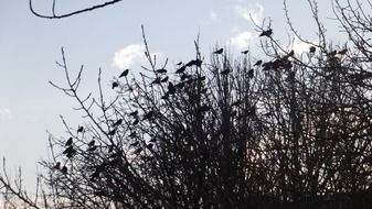 birds silhuettes on branches scene