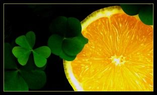four leaf clover and orange