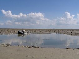 Wadden sea bottom