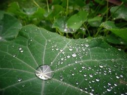 drops of rain on the green leaf
