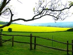 wooden fence near the rapeseed field