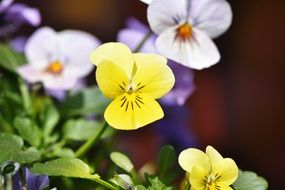 violet yellow white flower blossom bloom