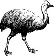 drawing of a walking ostrich