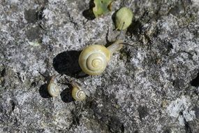 closeup of yellow snails family