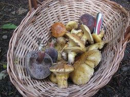 different types of mushrooms in basket