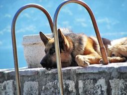 cute german shepherd dog outside scene