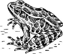 frog sitting black and white sketch