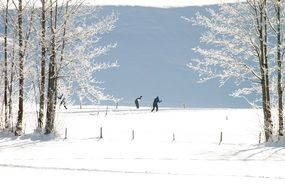 people are cross-country skiing on the winter track