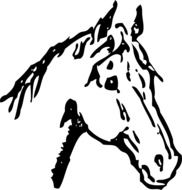 horse head, black and white drawing