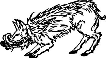 black and white drawing of a wild boar