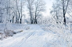white snowy road in the winter forest
