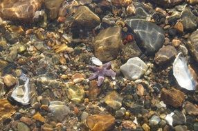 starfish and pebbles in clear ocean water