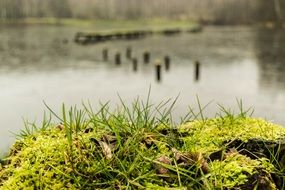 Green moss in front of lake water landscape nature