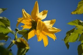 Yellow flower blue sky view