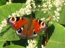 wild butterfly on the flowering bush
