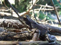forest toad in dry foliage