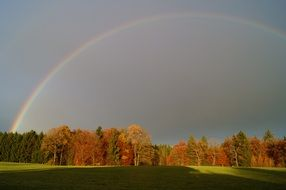 rainbow over the forest after rain