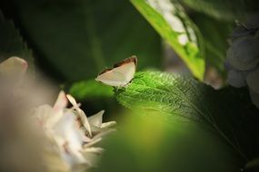 macro of a butterfly on a green leaf