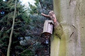 nesting box on a tree