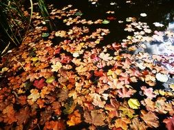 bright autumn leaves in a river