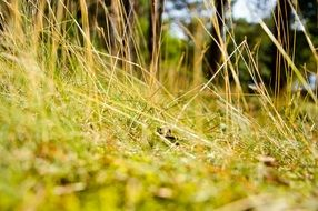 grass field macro photo