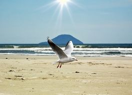 white seagull on a beach in Brazil
