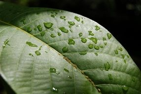 rain drops on green leaf close up