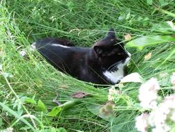 black and white cat laying on lawn