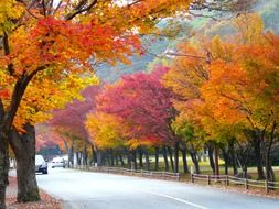 road along trees with colorful autumn foliage
