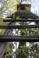 wooden staircase to the tree house