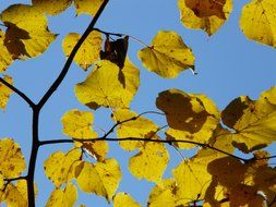 view of the blue sky through yellow leaves of linden