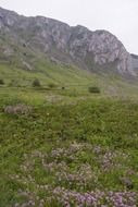 green meadow in the mountains transylvania
