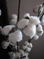 fluffy plant like white wool