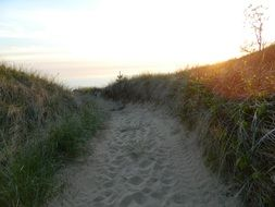 Sandy path in summer