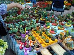 potted decorative succulent plants
