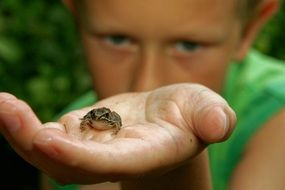Boy is holding frog