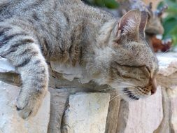striped domestic cat is sleeping on a stone