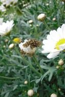 spider nest on a white daisy