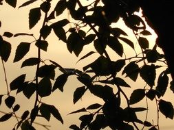 dark silhouettes of branches at sunset