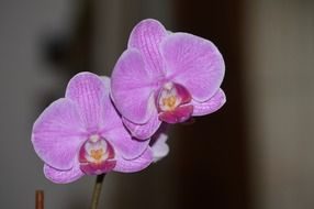 Pink flower orchid bloom