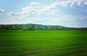 green agricultural field on a summer day