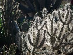 Arizona backlit cactus