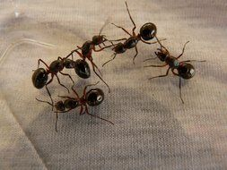forest ants on white cloth