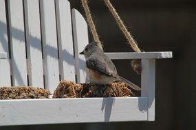 titmouse is sitting on a feeding trough