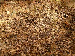 forest ants among the dry leaves