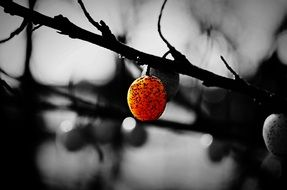 bright berry on a bare branch