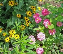 flowers seasonal zinnia