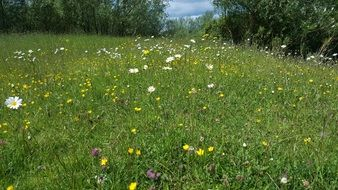 beautiful wild flowers in a green meadow