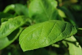 green leaf plant close-up