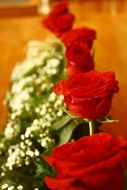 red roses in row